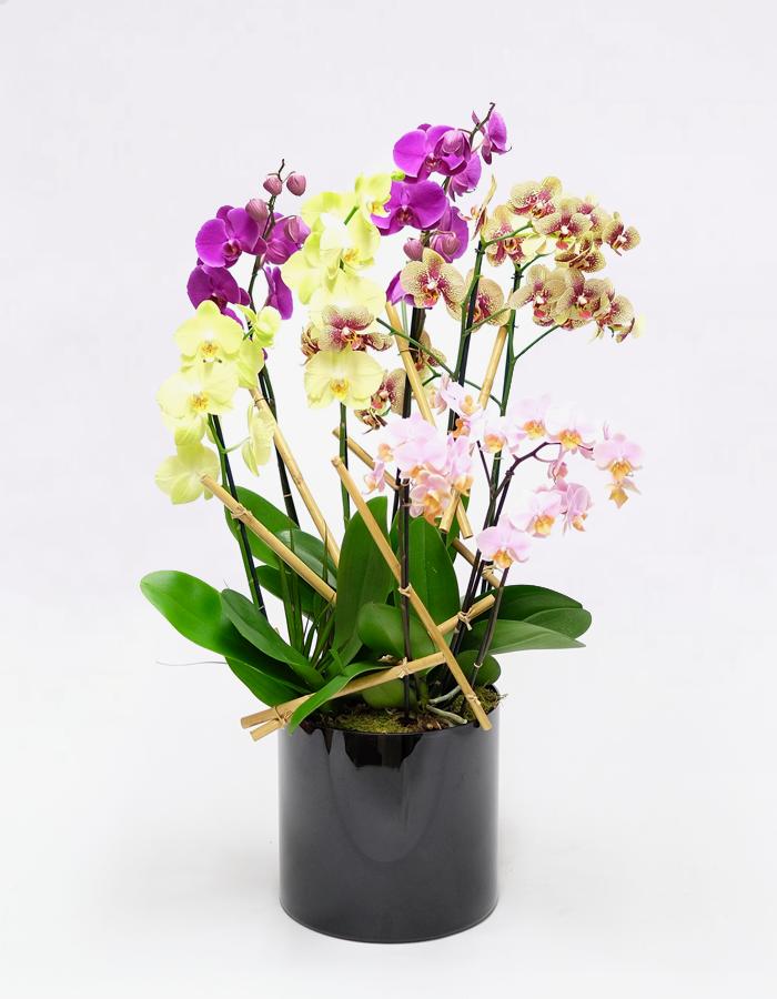 orchideju kompozicija