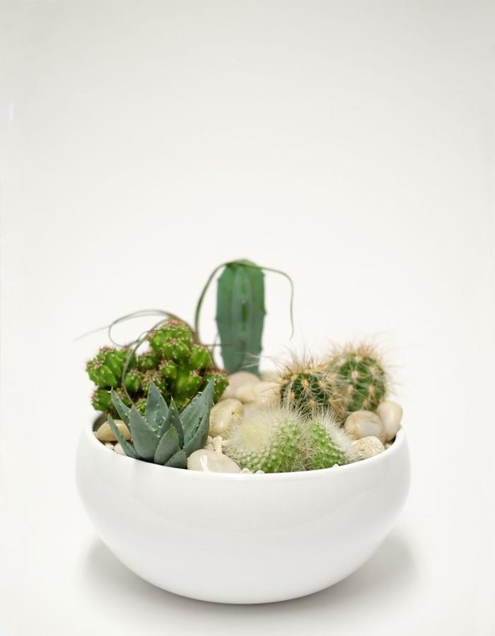 Sukulentų ir kaktusų kompozicija